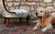 Restauration chauffeuse style anglais Louis-Philippe Napoléon III après restauration réfection tissu tartan écossais Tapissier tapissière Fabricant de luminaires abat-jour Métissage et Matières Yvelines 78 Eure 27 Hauts-de-Seine 92 Paris 75